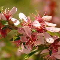 Войлочная вишня :: НАТАЛИ natali-t8