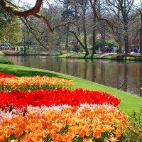 Там, где цветут тюльпаны :: Susanna Sarkisian