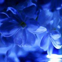 Луны сиреновые песни в сиреневых волнах садов.. :: Ирина Сивовол