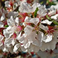 Весна идет, весне дорогу! :: Наталия Маркелова