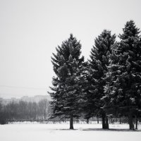 Зимний парк :: Сергей Швайбович