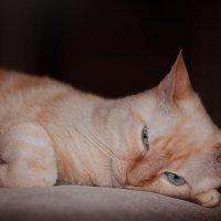 Жизнь кота - маята :: Олёнка Петрова