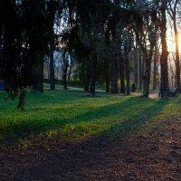 Закат в парке :: Сергей Тимченко