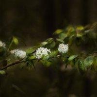 весенний цвет :: Андрей Бубенин