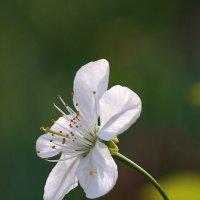 Цветок и... солнце! :: Валентина  Нефёдова