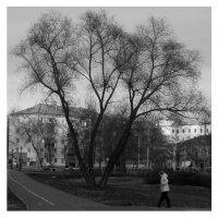 Морозное утро :: Александр Васильев