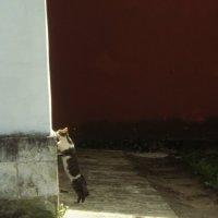 Ещё надежд полны мечты, наивны мысли и желанья, и как весеннее дыханье, стоит девчонка под окном.. :: Ольга Кривых