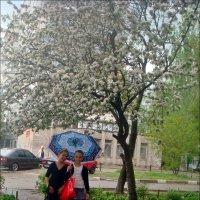 Под весенним дождиком :: Нина Корешкова