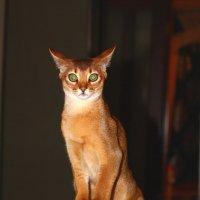 Кот! :: Наташа Шамаева