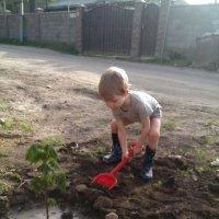 сын посадил свое первое дерево :: Татьяна Гулевич-Хациева