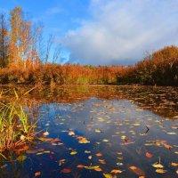 Разноцветье осени :: Владимир