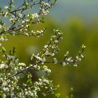 Весна :: Дмитрий Дербенев