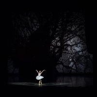 swan :: Ксения Воробьева