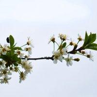 Весна... :: Жанна Шмыглина
