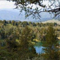 Таёжное озеро :: Наталия Григорьева