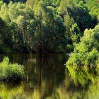 Весенних отражений невесомость... :: Лесо-Вед (Баранов)