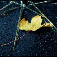 Зонт и  листик... и дождь... :: Валерия  Полещикова