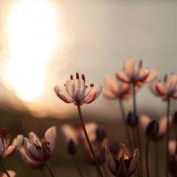 inconspicuous flowers :: Олег Сергейчик