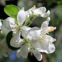 Милая нарядная солнечная яблоня! :: Валентина ツ ღ✿ღ