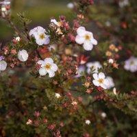 Цветы осени. :: Виктор Седов