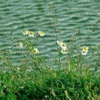 В майском солнце, нежится, искрится, Гладью вод, лаская берега :: Нади часоК