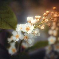 Весна. :: Андрей Стародубов