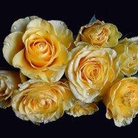 Чайные розы :: mila