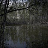 Вечер у пруда... :: Сергей Щелкунов