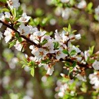 Весна :: Надежда Баликова