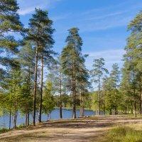Лесное озеро 2 :: Виталий
