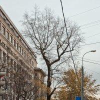 """Из серии """"Дерево в городе"""" :: Денис Масленников"""