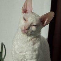 Кошечка в лукошечке :: Николай Густов
