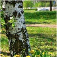 Вот вот лето...! :: Denis Aksenov