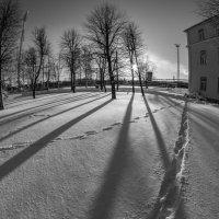 Тени на снегу :: shvlad
