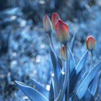 Небесные цветы :: Таня Вереск