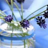 Нежно-голубые акварели :: Nyusha