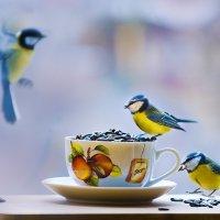 Синичкин завтрак :: Татьяна Котик