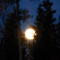 Круглоликая луна запуталась в ветвях :: Наталья Пендюк Пендюк