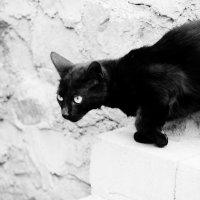totaly black :: Маргарита Квасова