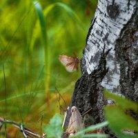 Сибирский шелкопряд жрёт лес :: Алина Репко