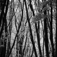 Весенний лес :: Игорь Дутов