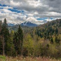 Одуванчики в горах уже отцвели... :: Аnatoly Gaponenko