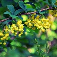 Весенний цвет :: Ростислав
