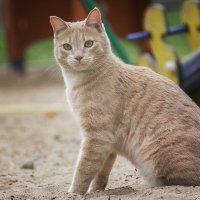 Песочный котик :: Ольга Гусева