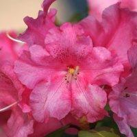 В весеннем саду... :: lady-viola2014 -
