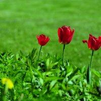 Свободная красота в природе :: Андрей Куприянов