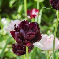 Цветы в саду. :: Татьяна Калинкина