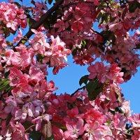 Райские яблочки в Коломенском) :: Ирина Князева