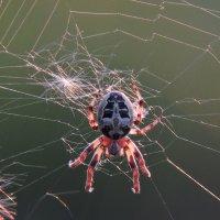 Маска паука :: Ната Волга