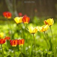 весна :: Борис Васильев